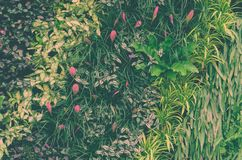 Decorative foliage vertical garden wall with tropical green leaf Royalty Free Stock Photography
