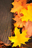 Decorative frame with autumn leaves Stock Photography