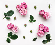 Decorative frame with pink bright roses and leaves on white background Stock Image
