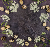 Decorative frame with quail eggs on dark background, top view royalty free stock image