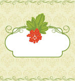 Decorative frame with red berries bunch on the orn Stock Photography