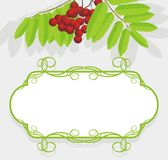 Decorative frame with rowan branch Royalty Free Stock Images