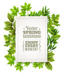 Decorative Frame With Spring Leaves. Decorative green frame with spring leaves and branches of deciduous trees and white rectangle with text in foreground vector Stock Image