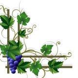 Decorative framework with grape. Royalty Free Stock Photos