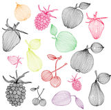 Decorative fruits Stock Image