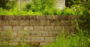 Decorative garden on a brick wall, green grass and trees background. stock photos