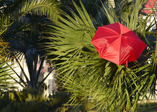 Decorative garden design with umbrella Royalty Free Stock Image