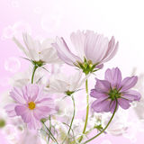 Decorative garden flowers Royalty Free Stock Photography