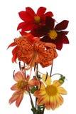 The decorative garden summer flowers Stock Photos