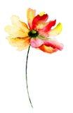 Decorative Gerbera flower Royalty Free Stock Photos