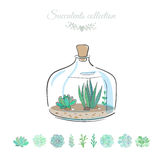 Decorative glass bottle with succulents. Floral composition in decorative bottle, vector illustration with succulents isolated on white Stock Photography