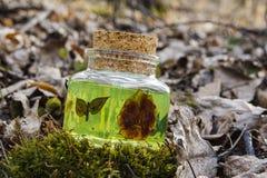 Decorative glass Stock Image