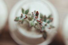 Decorative glass vase with white sand and succulents. On a white table Royalty Free Stock Photo