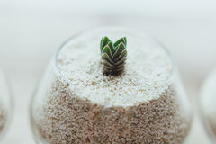 Decorative glass vase with white sand and succulents Stock Image