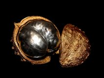 Decorative golden chestnut with silver nuts on a black background Stock Photos