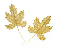 Decorative golden leaves Royalty Free Stock Photos