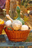 Decorative gourd Stock Photos