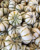 Decorative Gourd Season Stock Image