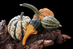 Decorative gourds Royalty Free Stock Photography