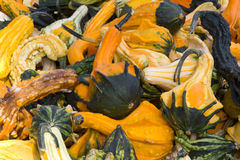 Decorative Gourds Royalty Free Stock Photo