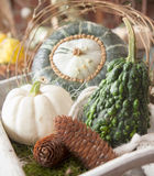 Decorative gourds Royalty Free Stock Photos