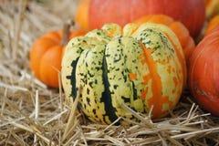Decorative Gourds Stock Image