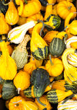 Decorative gourds on display Stock Photo