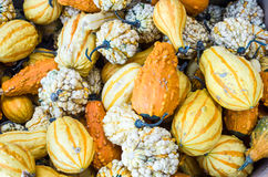 Decorative gourds on display Royalty Free Stock Photos