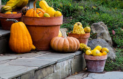 Decorative gourds in pots on stone stairs Stock Images