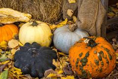 Decorative Gourds royalty free stock images