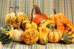 Colorful varieties of pumpkins, gourds and squashes stock photo