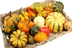 Colorful varieties of pumpkins, gourds and squashes on a white background royalty free stock photos