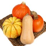 Colorful varieties of pumpkins, gourds and squashes on a white background royalty free stock photography