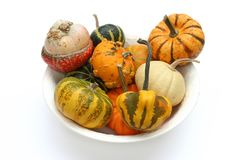 Colorful varieties of pumpkins, gourds and squashes on a white background stock images