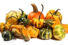 Colorful varieties of pumpkins, gourds and squashes on a white background royalty free stock photo