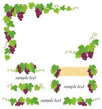 Decorative grape illustration. Set of grape's frame. Vector illustration Stock Images