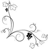 Decorative grape illustration (sketch) Royalty Free Stock Image