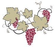 Decorative Grape Vine. Vector decorative floral composition, handmade Stock Photo