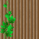 Decorative grape vine Royalty Free Stock Image