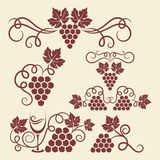 Grape vine elements. Decorative grape vine elements for design Royalty Free Stock Photos