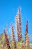 Decorative grass stock photography