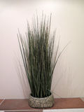 Decorative grass in bowl Royalty Free Stock Photography