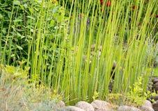 Decorative grass in crevice Stock Photos