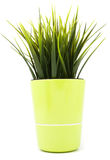 decorative grass in flowerpot Royalty Free Stock Photos