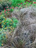 Decorative grass and flowers in a summer garden Royalty Free Stock Image