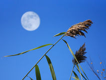 Decorative Grass And Moon Stock Images