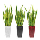 Decorative grass plant in flowerpot. Royalty Free Stock Images