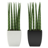 Decorative grass plant in flowerpot Stock Images