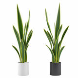 Decorative grass plant in flowerpot Stock Photography