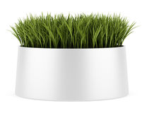 Decorative grass in pot isolated on white Royalty Free Stock Photos